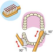 歯と歯ぐき