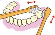 一番奧の歯